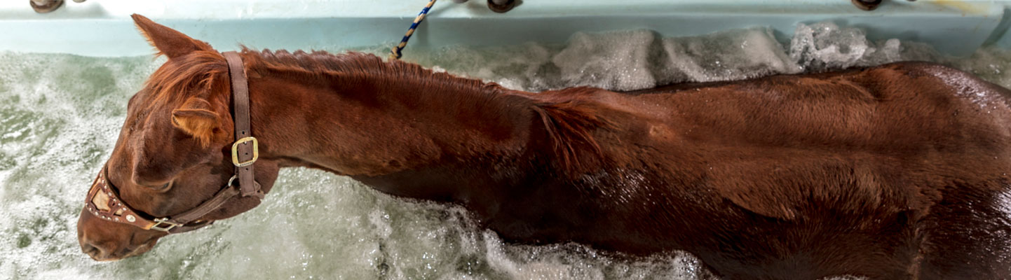 hydro therapy nirvana equine